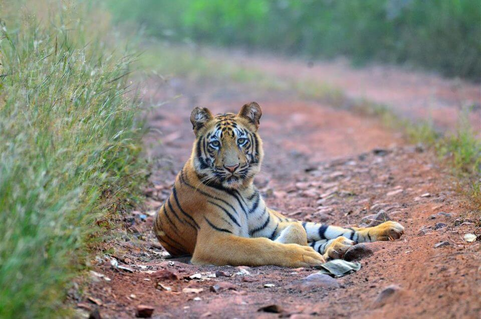 15 Must Visit Wildlife Sanctuaries of Maharashtra